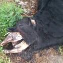 Argentina: Criador de gado é afligido por fenômenos estranhos e inexplicáveis 1