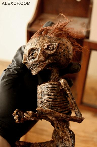 O museu que expõe espécimes negadas pela ciência 4