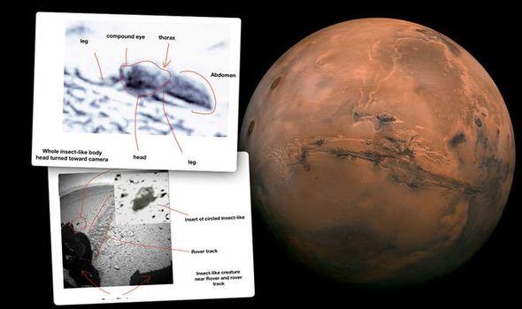 Universidade exclui comunicado de imprensa alegando evidências de insetos em Marte