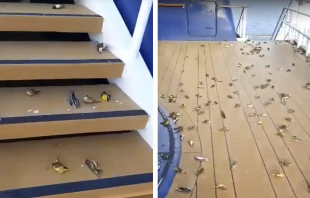 Milhares de pássaros estão agindo de forma estranha pelo mundo