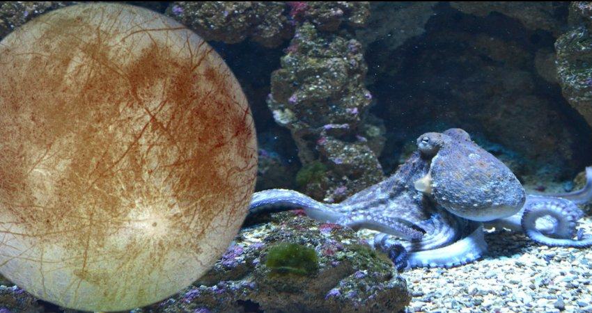 Alienígenas parecidos com polvos podem viver na Lua Europa de Júpiter