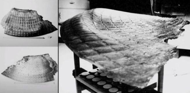Documentos raros revelam segredos das recuperações OVNIs acidentados