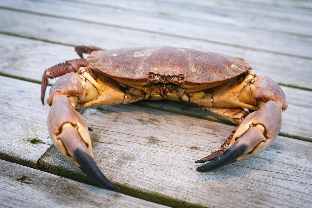 """Teoria evolucionária afirma que """"tudo acabará se transformando em caranguejos"""""""