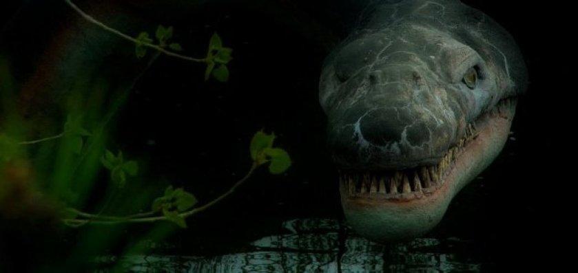 Pesquisador diz que monstro do Lago Ness é uma tartaruga antiga