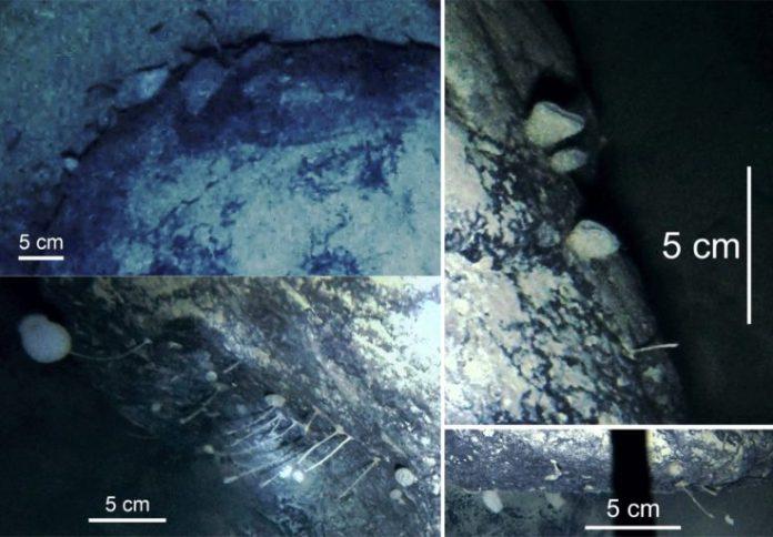 Criaturas estranhas são encontradas nas profundezas do gelo antártico