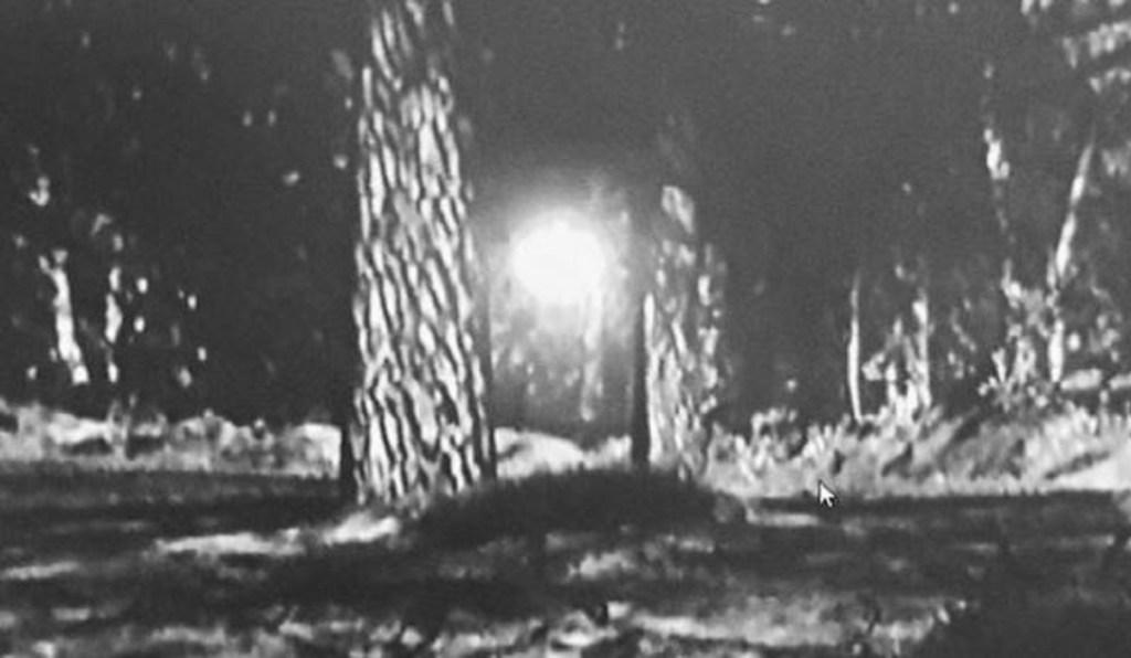 Caso Rendlesham: Testemunha revela fotos de globo luminoso na floresta