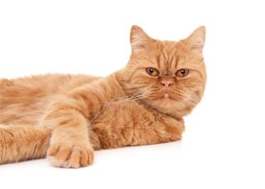 Rode kat Owiwi