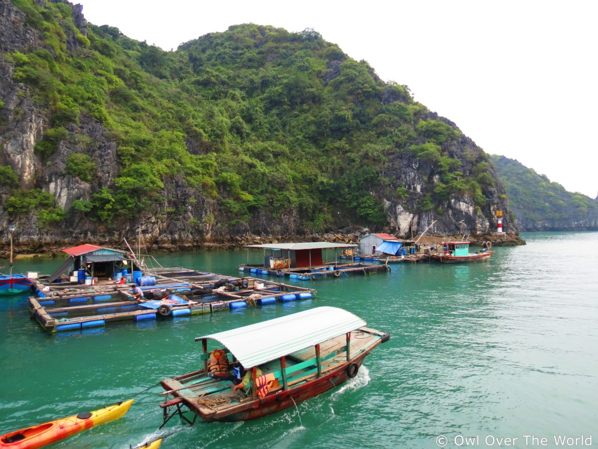 Things to do in Cat Ba Island, Vietnam + Travel Tips • Owl