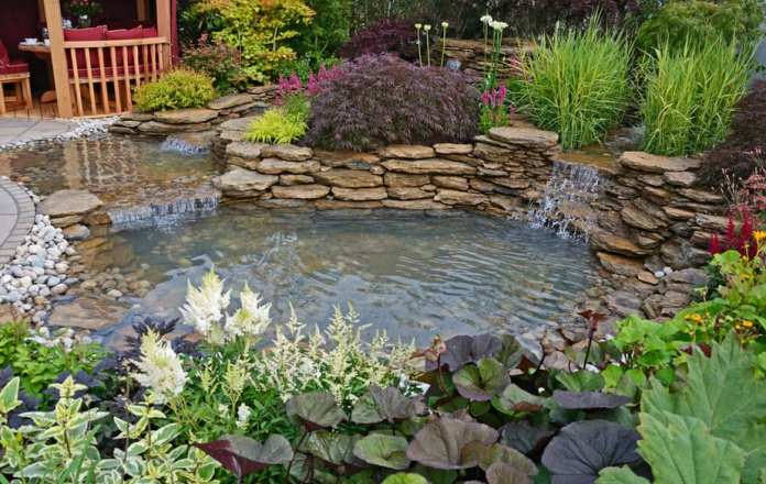 Best Plants for Water Gardens (+ Images to Spark Ideas!) 2019 24