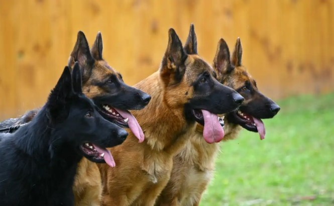 Dog Business In Nigeria Can Make You Money! - Owogram