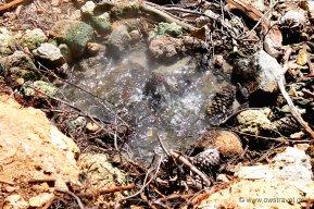 Neuseeland, Wai-O-Tapu: Ein heisses Wasserloch in Herzform