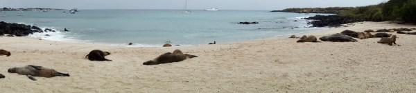 Galápagos, SanCristobal: Playa Man und Seelöwen wohin das Auge blickt