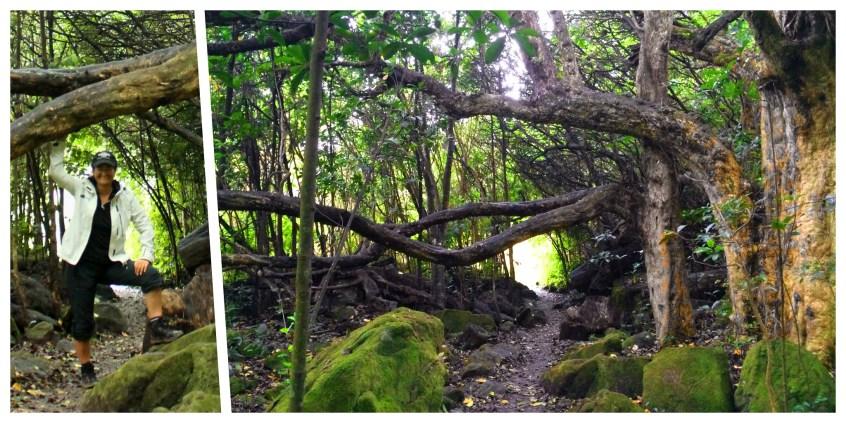 Coromandel, Cathedral Cove Trail