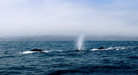 Ecuador_Puerto-Lopez104_Whale-Watching