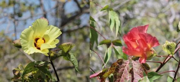Galápagos, San Cristobal, Los Tijeretas: Die Farben der Blüten sind der Grund warum man keine gelben oder roten Sachen tragen sollte, wenn man von Insekten verschont bleiben möchte