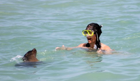 Galápagos, San Cristobal, Los Tijeretas: Otti und ihr neuer Spielgefährte