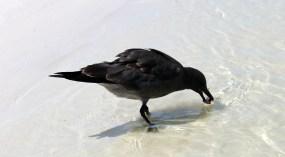 Galapagos, Santa Cruz, Tortuga Bay, Unser erstes Vogelfoto ( bleibt nicht das letzte ;-) )