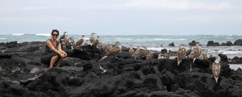 Galápagos, Santa Isabela, El Muro de las Lágrimas, the wall of tears, Mauer der Tränen: Otti inmitten der Blaufusstoelpel-Kolonie