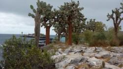 Galápagos, Santa Fe: Bezaubernde Landschaft mit tollen Kontrasten und eindrucksvollen Baumkakteen
