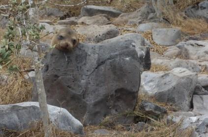 Galápagos, Santa Fe: Ein bequemer Platz ist viel wert, noch dazu mit guter Übersicht