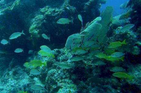 Mexiko, Isla Mujeres, Diving Manchones