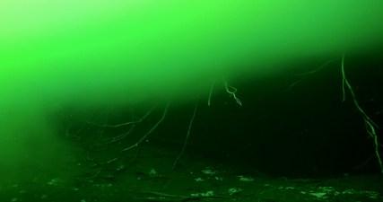 Mexiko, Tulum, Cenoten Tauchen: Surrealistischer Anblick durch Algeneinfärbung in der Cenote Car Wash