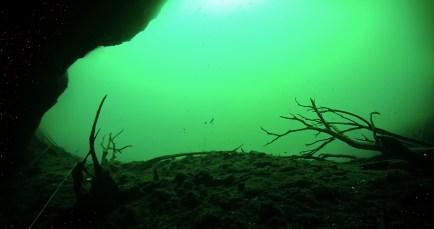 Mexiko, Tulum, Cenoten Tauchen: Unwirkliche Ansichten unterhalb der Algenschicht in Aktun Ha