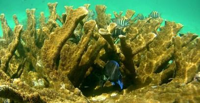 Belize Barrier Reef: Schnorcheln am Hol Chan, dem kleinen Kanal