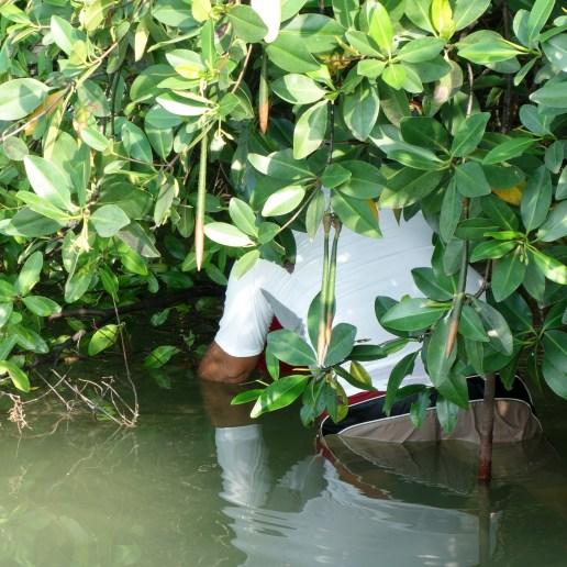 Belize, Caye Caulker: Auf der Suche nach den Seepferdchen