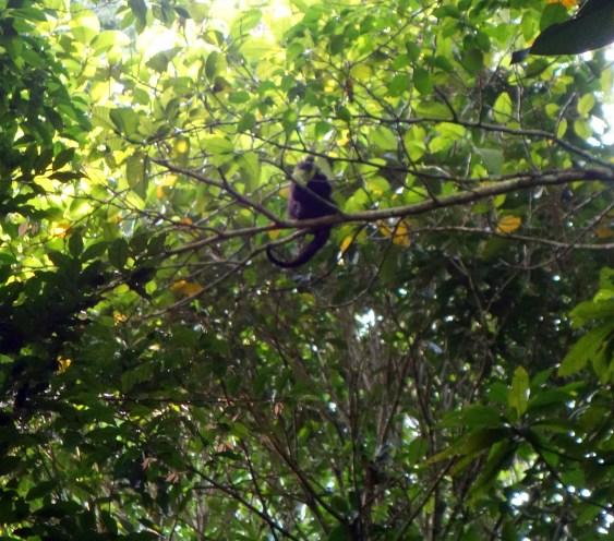 Palenque, Dschungeltour: Endlich mal ein Affe!