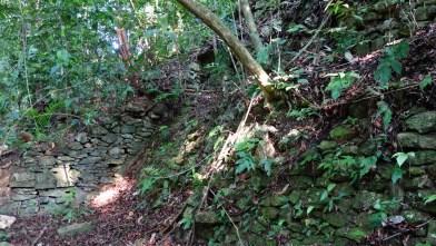 Palenque, Dschungeltour: Faktisch ist jeder Hügel im Dschungel ein Maya-Bau