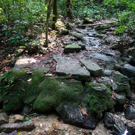 Palenque, Dschungeltour: Die Reste des gepflasterten Weges sind noch recht gut zu erkennen