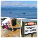 Lake Taupo: Schwarze Schwäne vor dem Tongariro Nationalpark mit dem Mount Doom, dem Schicksalsberg (oben) und Otti, die testet ob die heiße Quelle auch wirklich heiß ist