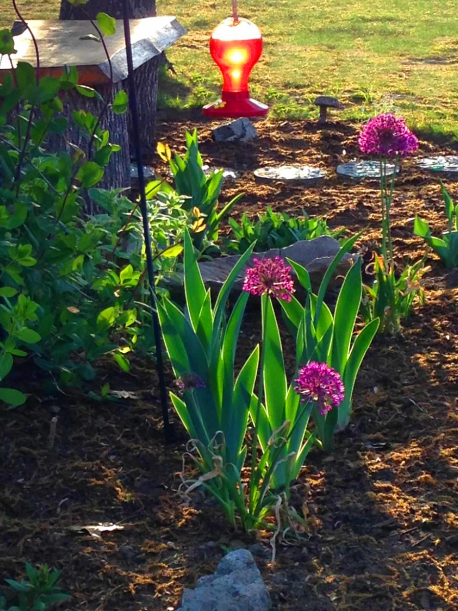 Oxbow Schoolhouse Flowerbed