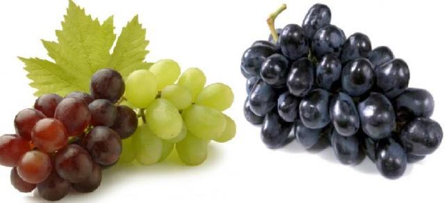 Grapes farming in kenya