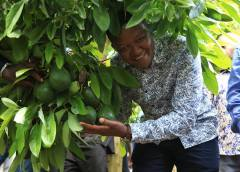 Governor Mutua: Hass avocados are in super high demand in the world