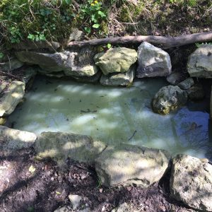 Astrology of Now: The Mystic Well