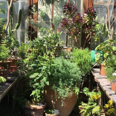 Succulent House