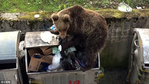 These wild bears have the right idea, scavenging from dumpsters should be far more socially acceptable.