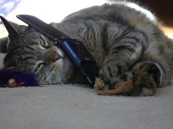 Cat-caller