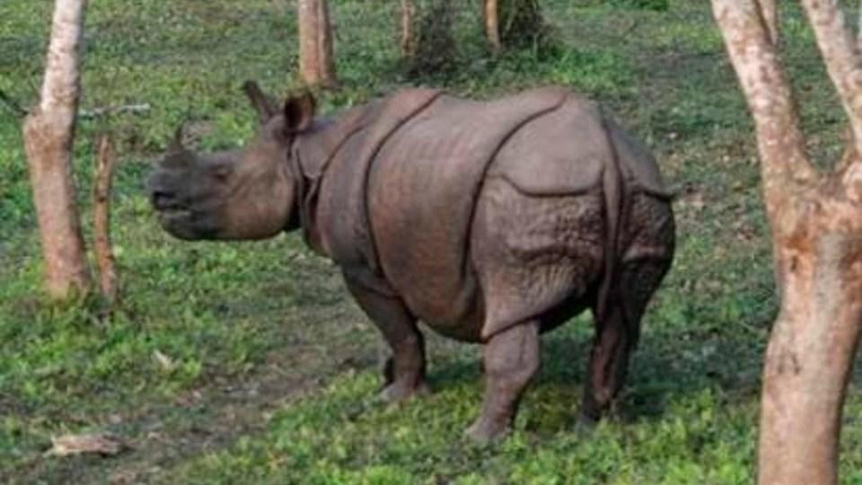 extinción masiva vertebrados