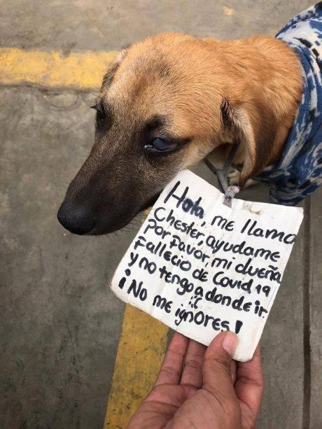"""""""No me ignores"""": Un perrito pide ayuda tras la muerte de su dueña por coronavirus"""