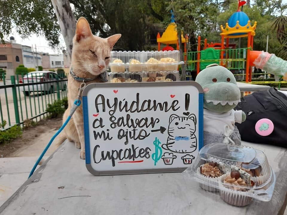Antonio: El gatito que vendió cupcakes en la CDMX para salvar su ojo