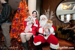 Santa and his helper meet with the Eventi's four-legged guests