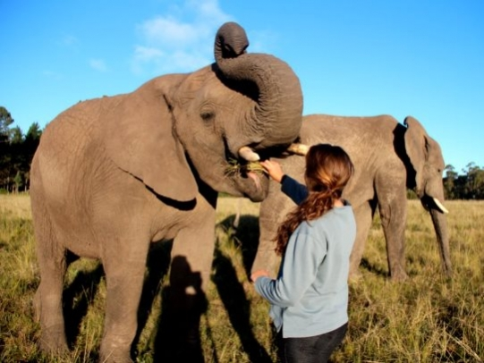 Volunteer elephants South Africa