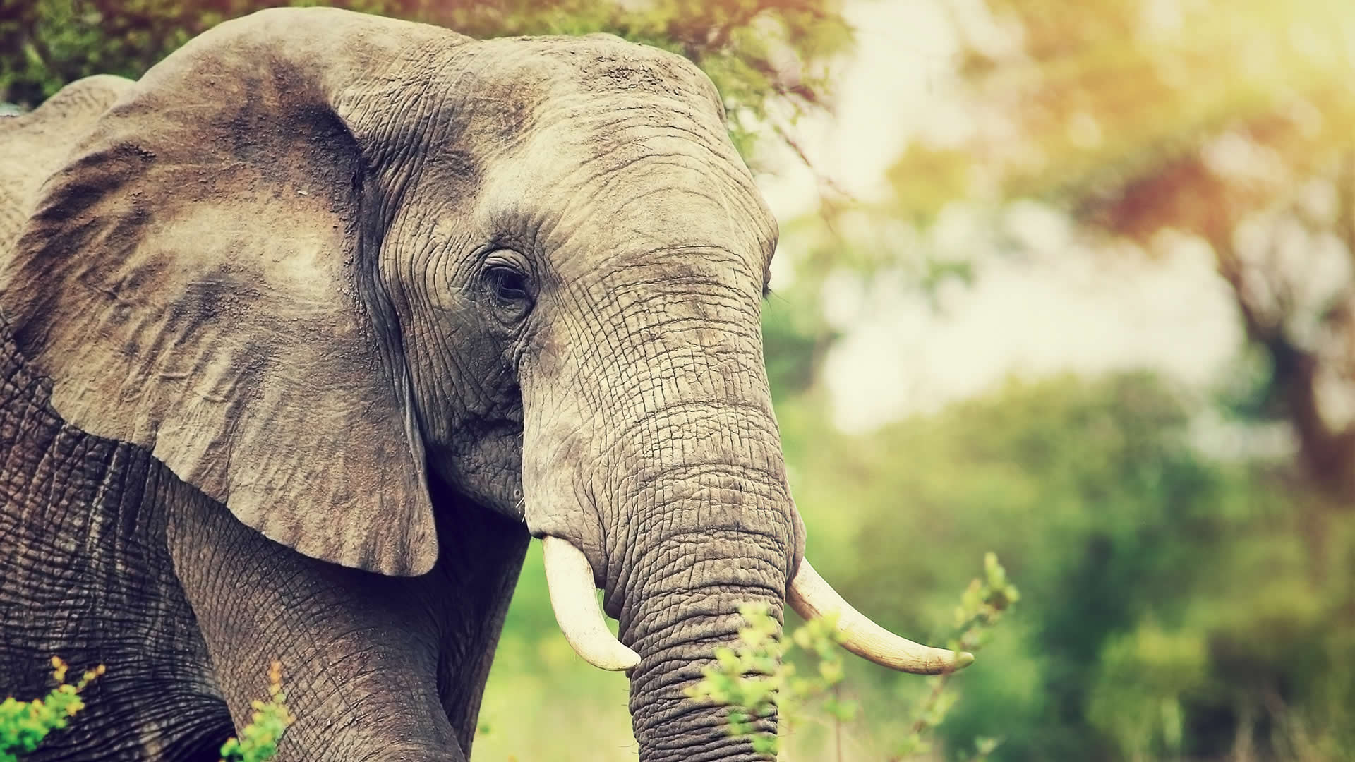 Volunteer Work With Elephants Gap Year Projects With