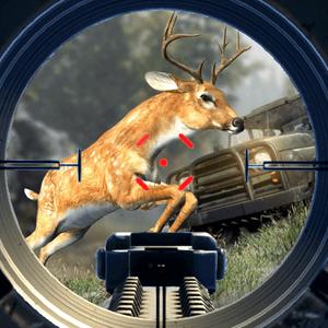 Safari Hunt 2018