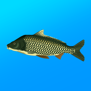 True Fishing. Fishing simulator