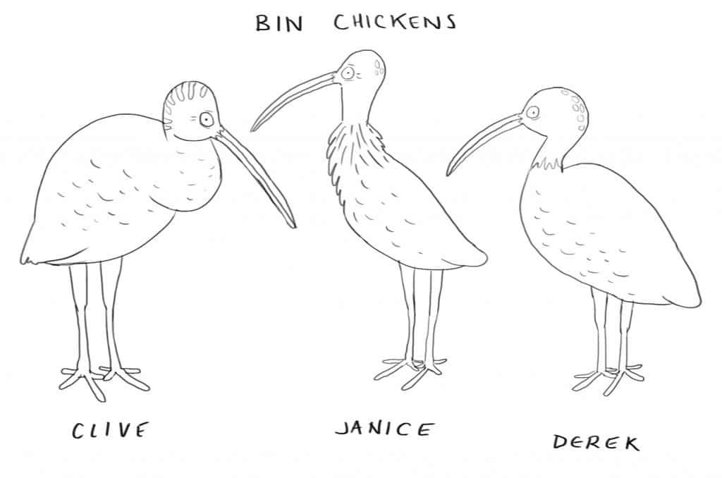 ABC Fresh Blood Series: Bin Chickens