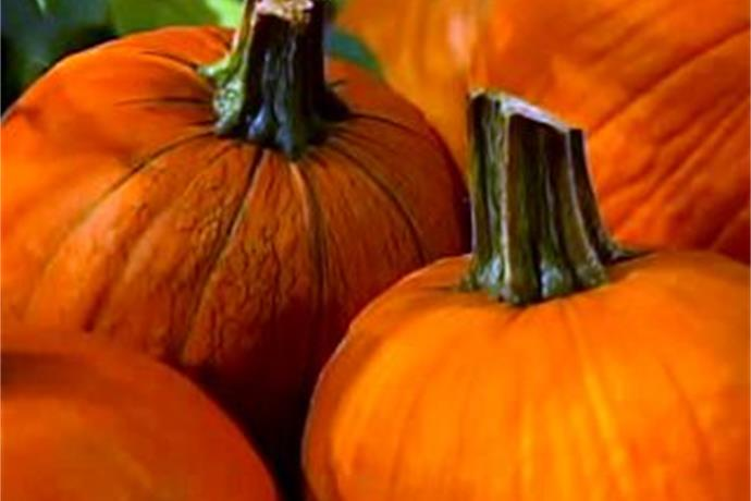 Fall Festival This Weekend at Wickman's_571443263348100047